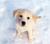 puppy in snow - Copy