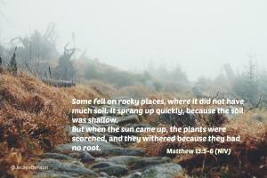 Matthew 13 5.6 niv